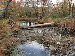 Walnut Creek Lake Raleigh NC 0484