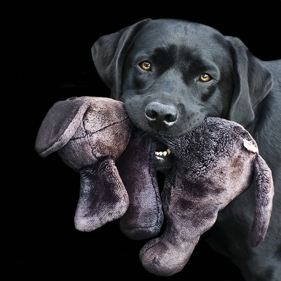 A boy with his toy.