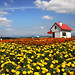 Hokkaido, Japan by Pic_Joy