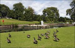 Handsworth Park Walk 8/10 (fv07)
