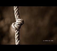 La force du lien - The strength of the link - Photo of Saint-Jouan-de-l'Isle