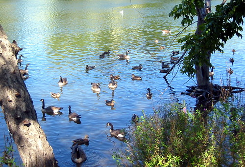 Endangered new jersey water water everywhere and yet for Passaic river fishing