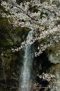 春の米の粉の滝