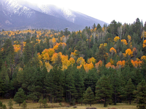 fallcolors aspen coconinonationalforest