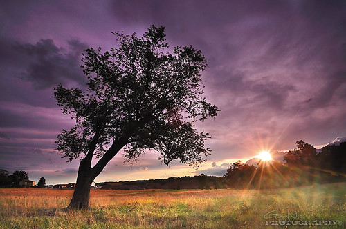 sunset sun storm tree field clouds sunrise landscape nikon purple maryland explore flare burst d5000 mygearandmepremium mygearandmebronze mygearandmesilver