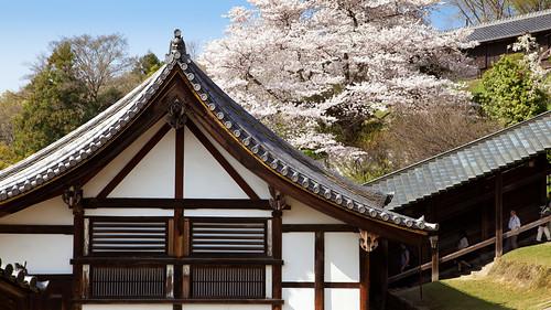 japan kyoto 日本 sakura nara kioto japón 京都市 奈良市 japón nigatsudohall