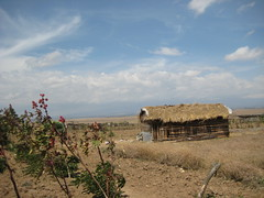 Typical wood and wattle house on the plain, Village 2,Solio Settlement,  Central Kenya
