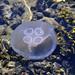 Ljungskile 2010-06-26_079