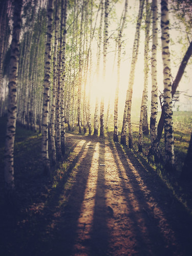 road trees light summer vertical forest landscape woods path 2010 kazan tatarstan canonpowershota530 5kviewsomgwhynotmybwworks
