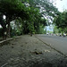 Suasana asri di Jl. Juanda. : Shady tree canopy along on Juanda Street. Photo by Ardian