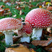 Small photo of Fungi