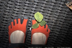 stowaway blackberry leaf between my toes