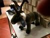 Swedish plush reindeer