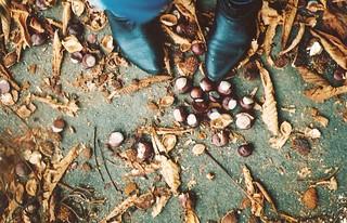 Autumn Colour Week - Brown