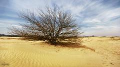 Desert Tree (c) Hans de Brouwer