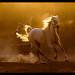 pride  by Mustafa Khayat