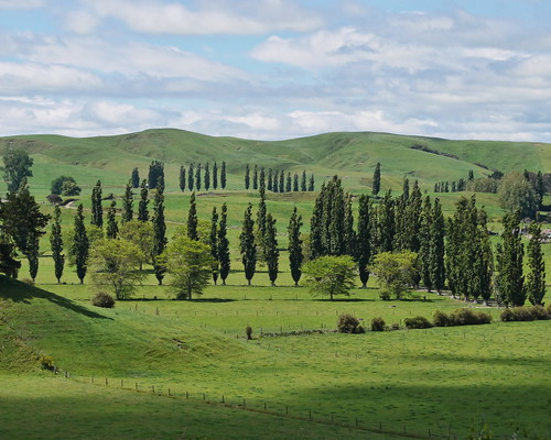 Waikato Countryside