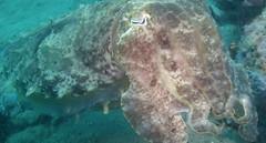 fish(0.0), coral reef(1.0), animal(1.0), marine biology(1.0), marine invertebrates(1.0), cuttlefish(1.0), underwater(1.0), reef(1.0),