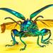 green metal beetle by nanomet's