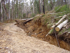 logging, trail, soil, wood, tree, forest, natural environment,