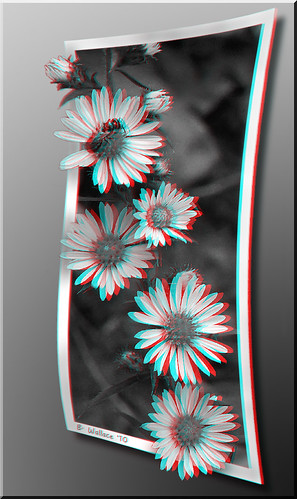 blackandwhite bw flower nature photoshop bug insect outside outdoors effects stereoscopic 3d weed brian border manipulation monotone ps stereo frame wallace wildflowers grayscale hb outofbounds stereoscopy oof oob stereographic outofframe historybrush 2d3d brianwallace stereoimage pixelshift outofborder stereopicture convesion