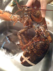 spiny lobster(0.0), crab(0.0), crayfish(0.0), homarus(0.0), arthropod(1.0), animal(1.0), shellfish(1.0), seafood(1.0), invertebrate(1.0), homarus gammarus(1.0), food(1.0),