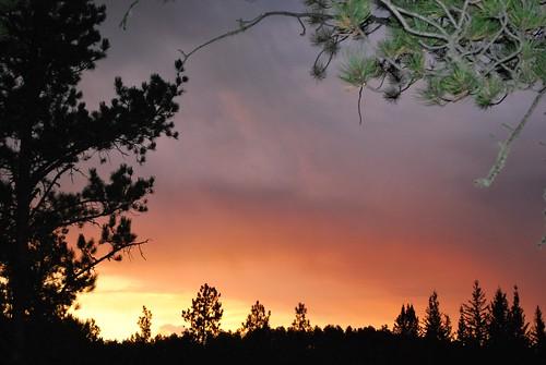 morning trees sky nature clouds southdakota forest sunrise dawn nikon sd untouched deadwood blackhillsnationalforest mywinners