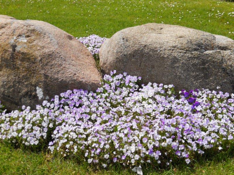 Rocalla en primavera