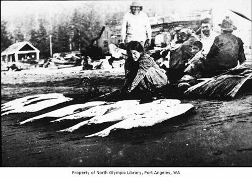 Native American woman cleaning halibut on beach at Neah Bay