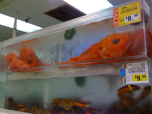 Scary giant fish at 99 Ranch Market   Flickr - Photo Sharing!