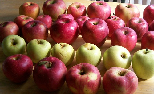 """No Brown"" GMO Apple Fast Tracked for Approval"
