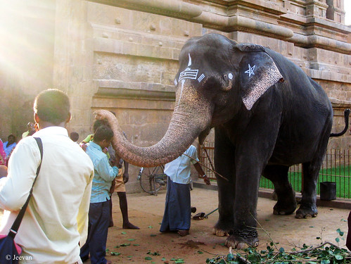 Blessed by Big Temple elephant