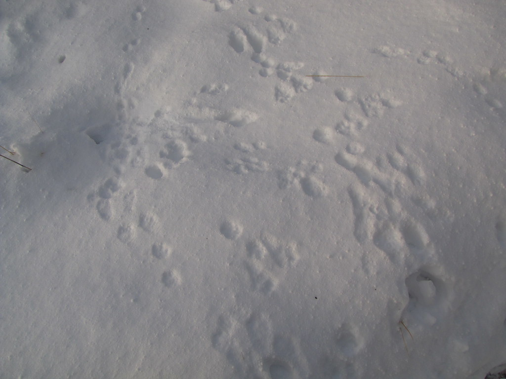 tracks and holes on the snow cover