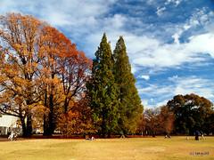 Autumn, Japan