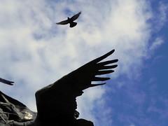 animal, bird of prey, wing, blue, accipitriformes, sky, bird, flight, condor,