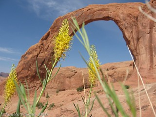 Fall flowers at Corona Arch, Moab, Utah