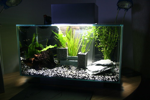 My first fish tank attempt for First fish tank