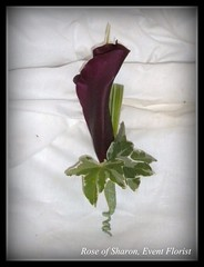Boutonniere: Dark Purple Mini Calla Lily