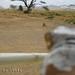 Spanky Serengeti 3