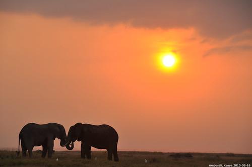 2010 d90 animal动物 sunrise日出 nikon尼康 kenya肯尼亚 africa非洲