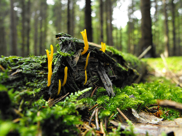 yellow fungus on old wood | Flickr - Photo Sharing!