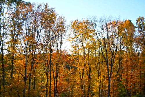 trees fall colors nikon hdr madelinejanephotography