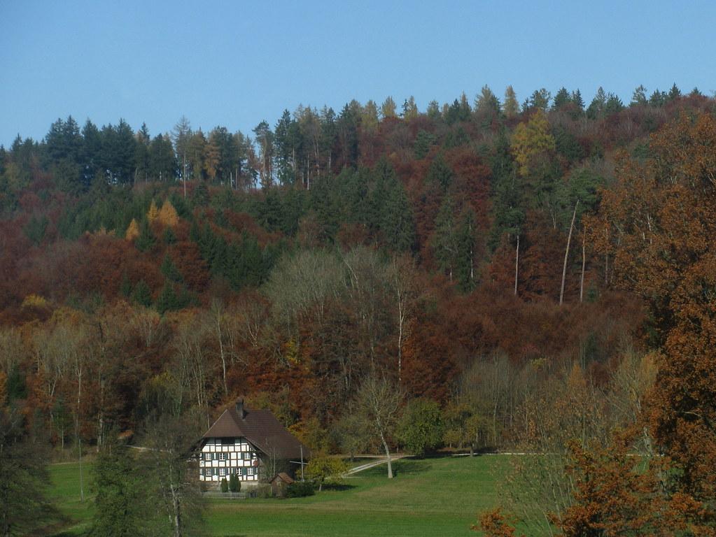 Haus Im Wald Kaufen Schweiz - Heimidee