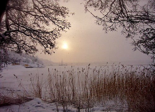 trees winter sunset sea mist photography harbor boat sweden stockholm panasonic mueller artisticphotos sticklinge islinge lidingö