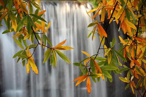 (Water [Fall) Season]