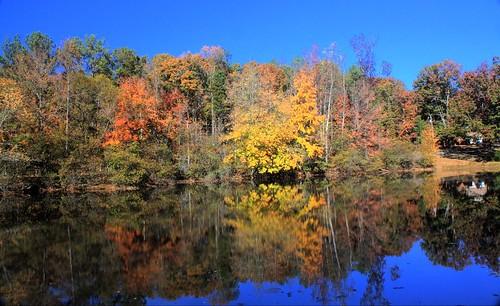autumn trees lake fall nature leaves hdr