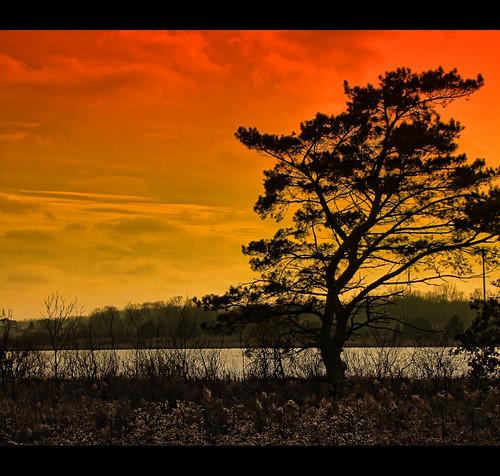tree minnesota silhouette rochester explore rochestermn sunsetfilter manipulatedsky