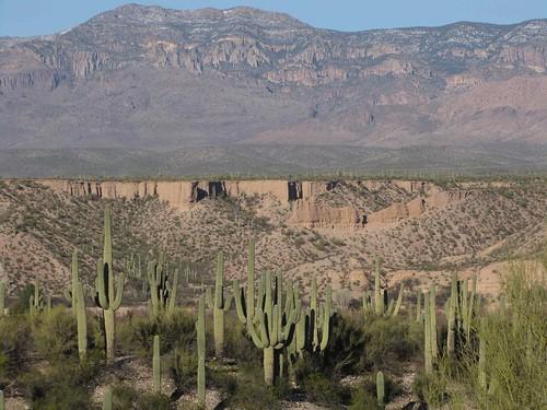 arizona usa cacti landscapes desert unitedstatesofamerica gps 2010 saguarocactuscarnegieagigantea