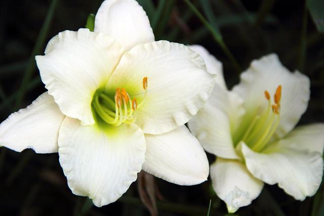 20170702_Flowers_013