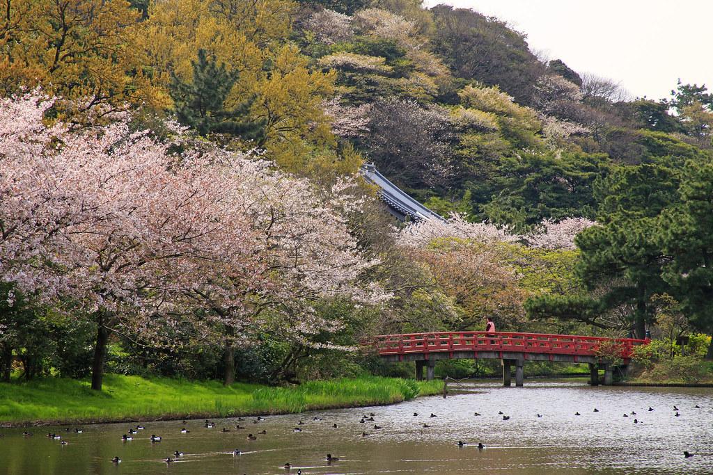 Sankeien Sakura